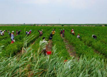 La España rural necesita un rejuvenecimiento. ¿Significa esto más oportunidades de trabajo para los inmigrantes?
