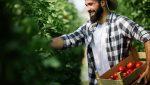 empresas agrícolas