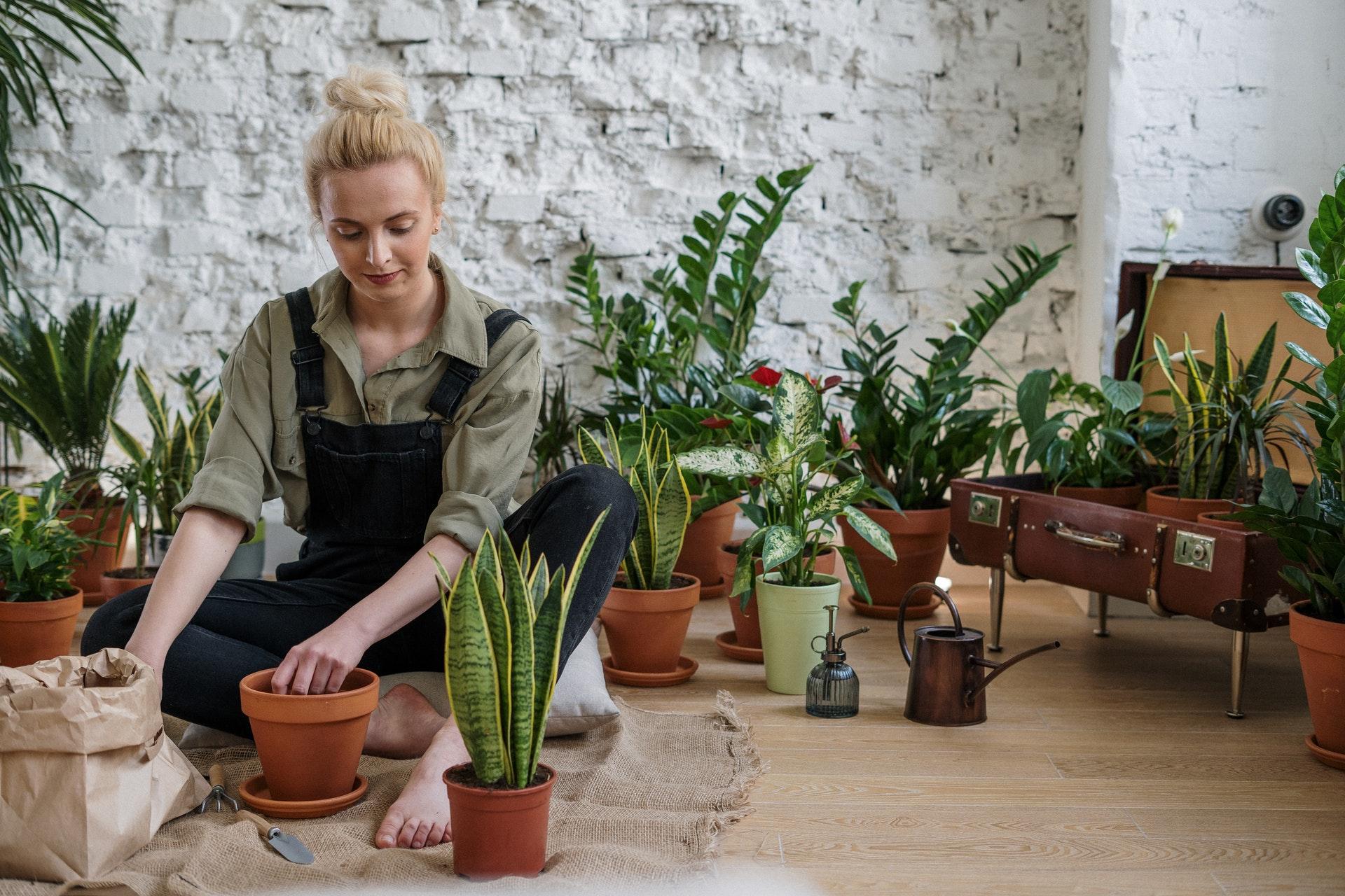 Curso jardinería gratis